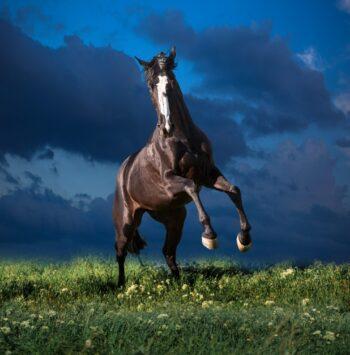 Hest med blå baggrund